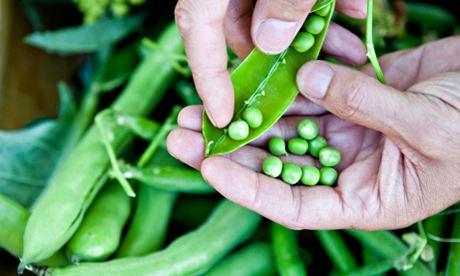 Grow your own peas