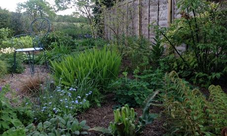 Kate Gould's garden