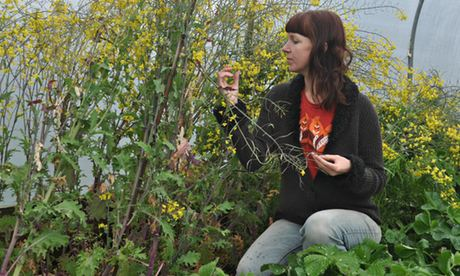 Kim Stoddart with her kale plants