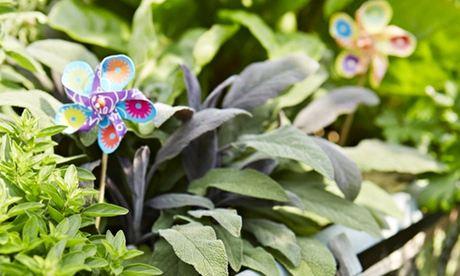 Plant a mobile herb garden