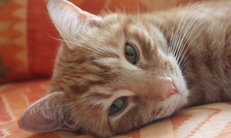 Orlando the ginger cat