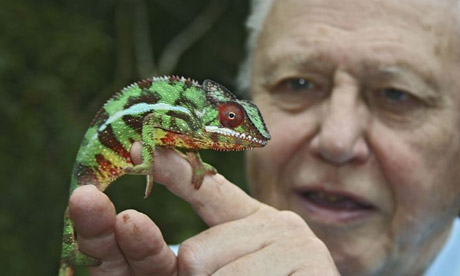 Life in Cold Blood: David Attenborough and panther chameleon