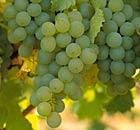 English vineyards won two gold awards at a prestigious wine challenge