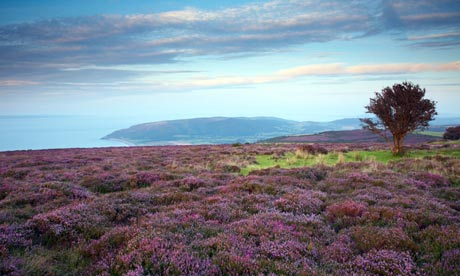 Porlock Common and Bossington Hill Exmoor National Park Somerset England UK