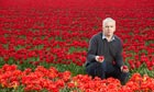 Mark Eves, flower grower, crouches amid a field of red tulips