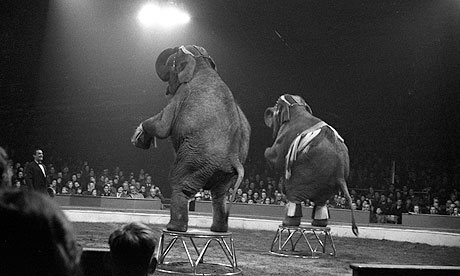 Circus elephants by Basil Hyman