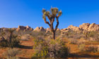 Spring in Joshua Tree National Park, California