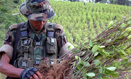Colombian soldier on coca plantation