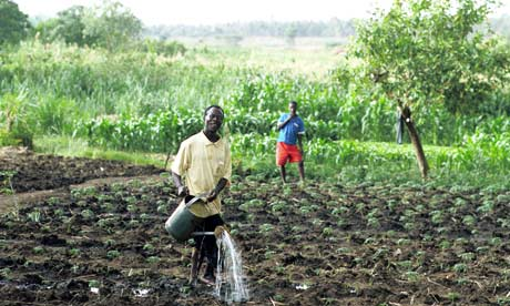 Farming in Malawi, Africa