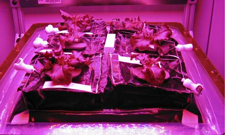 Nasa's Veggie vegetable production system