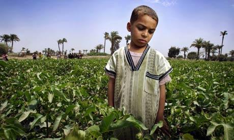 Child Labor in Egypts Cotton fields