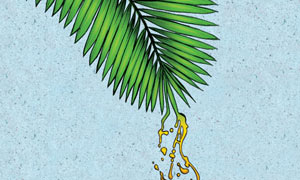 Palm oil illustration
