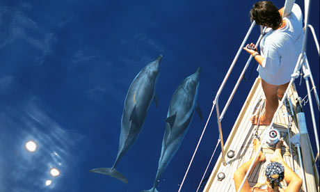 dolphins in the Ligurian Sea