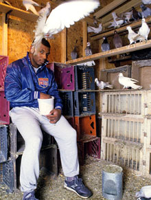 Mike Tyson and pigeons