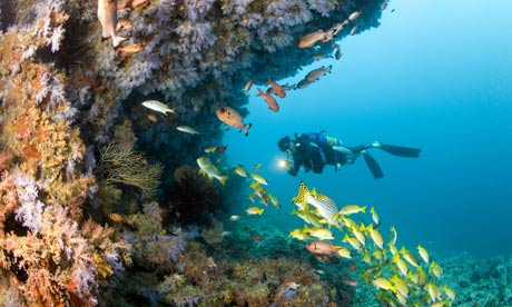 Healthy coral reef and diver, Maldives