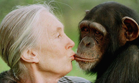 Jane Goodall: 50 years working with chimps | Discover interview ...