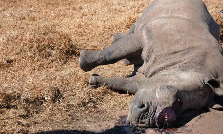 rhino killed South Africa, photo from the Guardian