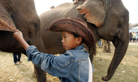 Mahouts (elephant keepers) are being offered incentives to conserve the elephant population of Laos.