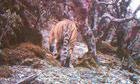 lost-land-tiger-bbc-series