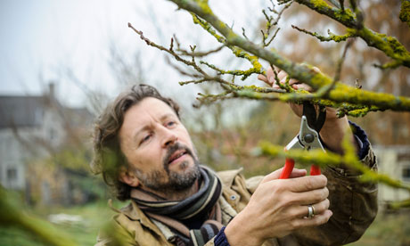 pruning mulberry