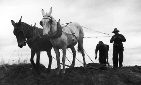Farmers-with-mules-in-193-005.jpg