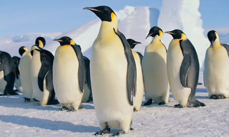 Wiinterrr's Day: Love and other animals (Emperor Penguins) Penguin Group