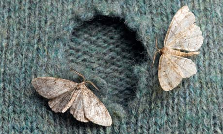 clothes-moths-on-sweater-008.jpg