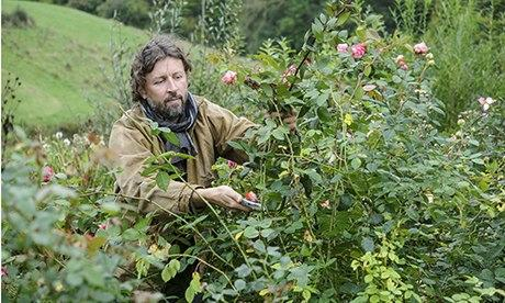 Dan cutting back the longest growth on rush roses