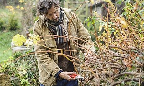 Dan pruning a vine