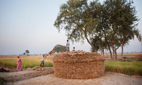 rice in nalanda bihar india