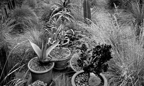 Archive, city garden
