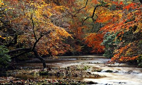 The Fish Ladder by Katharine Norbury review – wild and wonderful walks