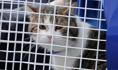 A tabby cat named Larry arrives at his new home, 10 Downing Street