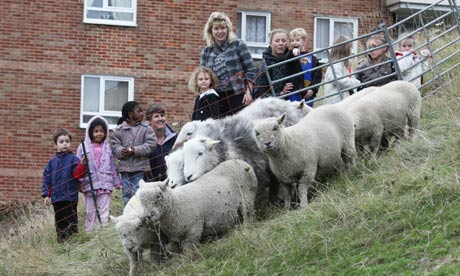Urban shepherds in Brighton