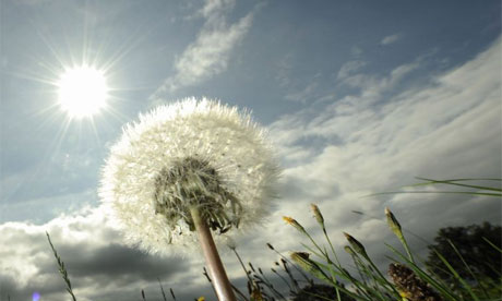 The sun shines down on a dandelion clock near the northern German town of in Hohnstorf