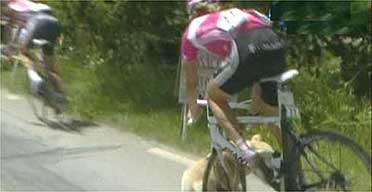 Man bikes dog