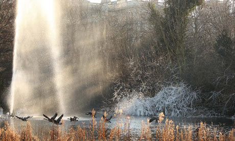 Canada geese fly past the fountain and frozen trees on Duck Island in St James's Park