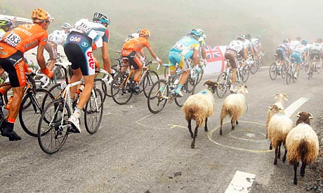 Sheep on Tour