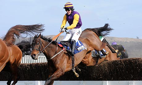 Noble Prince was victorious at the Cheltenham Festival