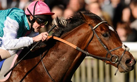 Frankel  Race Horse Head Profile