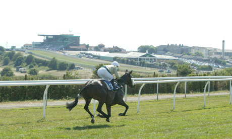 A lone racehorse on Brighton racecourse, far from the stands