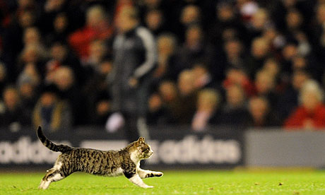 A cat on the Anfield pitch