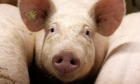 The use of antibiotics in food animals has been questioned by a group of 150 US scientists