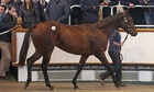 Galileo yearling filly who fetched a record price