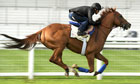 Animal Kingdom at Ascot gallops