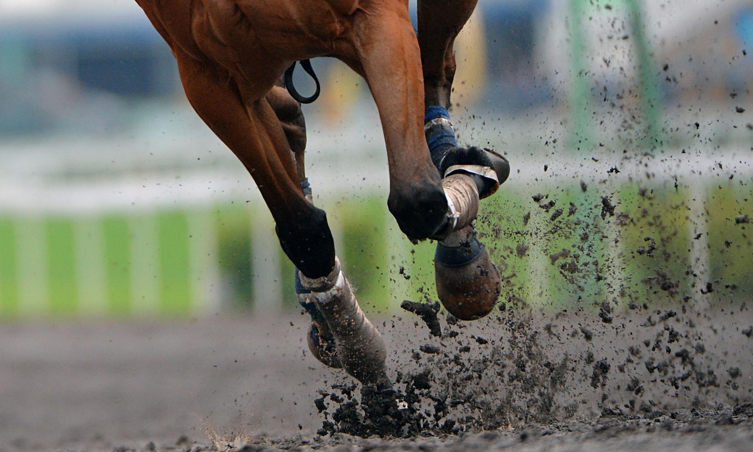 horse training business plan sample