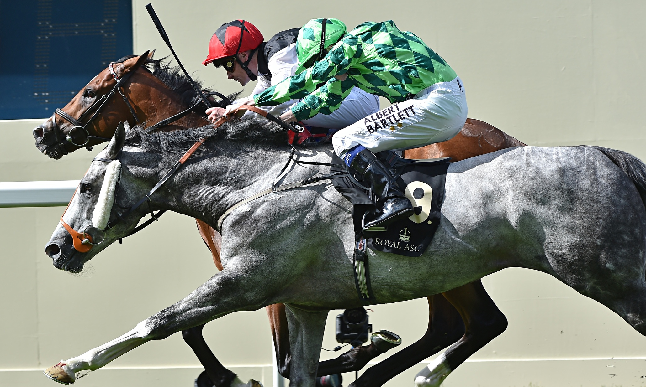 horse racing tips free uk dating