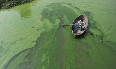Fisherman rows a boat in the algae-filled Chaohu Lake in Hefei