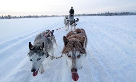 Husky team on frozen lake