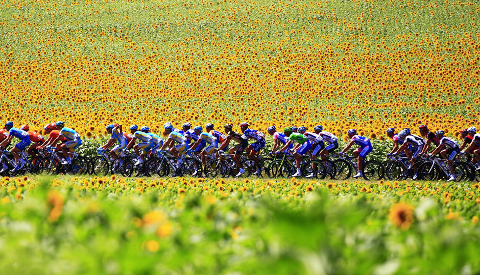 The pack ride past sunflo 001 Tour de France 2011 in pictures